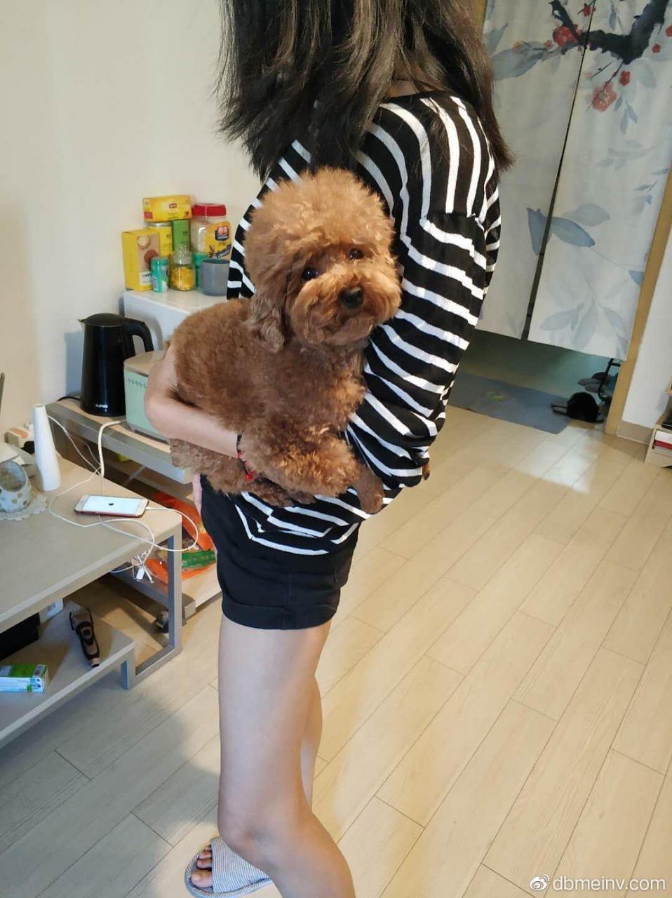 有谁家里有狗给我抱抱
